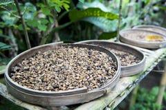 Luwak coffee beans Royalty Free Stock Image