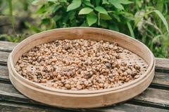 Luwak kaffebönor på bambuplattan arkivbild
