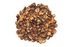 luwak kopi Стоковые Фото