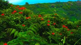 Luxúria tropical Fotografia de Stock Royalty Free