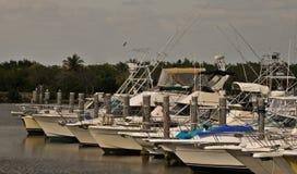 Luxeboten bij Jachthaven de Zuid- van Florida Stock Afbeeldingen