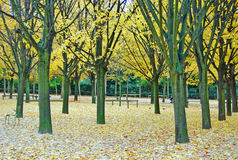 Luxembourg garden in Paris. A very popular garden in Paris in autumn with trees and fallen leafes on the grass royalty free stock photo