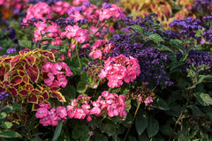 Luxembourg Garden in Paris. Flowerbed full of flowers in Luxembourg garden, Paris , France stock photo