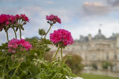 Luxembourg Gardens. Palace and park ensemble in the heart of Paris. Former royal, now national palace park royalty free stock photography