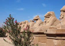 Luxor Royalty Free Stock Photography