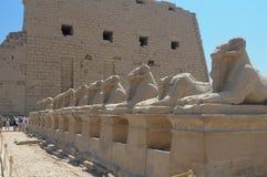 Luxor-Sphinx Ägypten Stockbilder