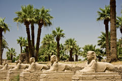 Luxor temple. Details of Egyptian art. An example of the art of the pharaohs Stock Photography