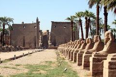 Free Luxor Temple Stock Images - 8089084