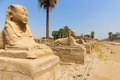 Luxor temple. At Luxor city - Egypt stock photos