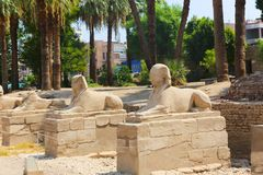 Luxor temple. At Luxor city - Egypt stock photo