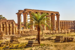 Luxor Temple and a palm tree Royalty Free Stock Image
