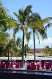 Luxueuze bar onder palmen Stock Foto's