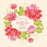 Luxueuze rode pioen Royalty-vrije Stock Afbeeldingen