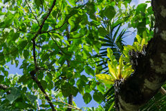 Luxuriant bush environment and tree canopy Niue Royalty Free Stock Image