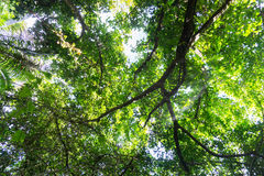 Luxuriant bush environment and tree canopy Niue Stock Photography