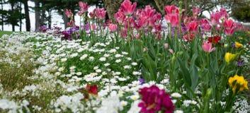 Luxuriant en kleurrijke de de lente bloemengroei Stock Foto's