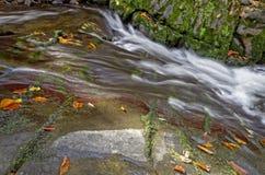 Luxuriant halny strumień z liśćmi zdjęcie stock