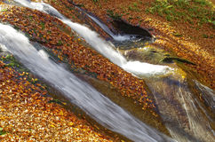 Luxuriant mountain stream with leaves. Royalty Free Stock Photography