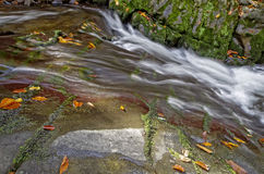 Luxuriant mountain stream with leaves. Stock Photo