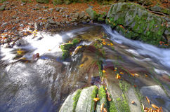 Luxuriant mountain stream with leaves. Stock Images