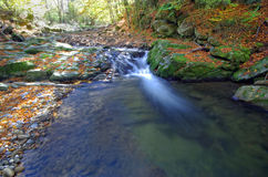 Luxuriant mountain stream with leaves. Royalty Free Stock Image