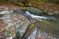 Luxuriant mountain stream with leaves. Stock Image