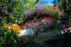 Luxuriant tropical garden at a resort in Guatemala. Picturesque view of a charming resort on the shore of Lake Atitlan in Guatemala surrounded by luxuriant Stock Photography