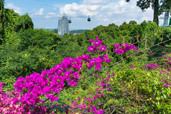Luxuriant tropical plants with funicular, mountain lifts on the Royalty Free Stock Photography
