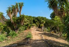 Luxuriant vegetation of the garden park Villa Giulia in Palermo, Sicily Stock Photography