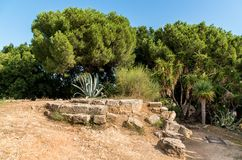 Luxuriant vegetation of the garden park Villa Giulia in Palermo, Sicily Royalty Free Stock Image