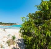Luxuriant vegetation in Spiaggia del Principe. Luxuriant vegetation by the foreshore in Spiaggia del Principe, Sardinia stock images