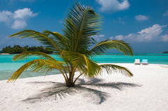 Luxurious and beautiful beach setting - palm tree and sea beds. Beautiful beach setting - palm tree and sea beds Stock Photos