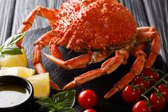 Luxurious boiled spider crab surrounded by fresh tomatoes, lemon. Herbs and melted butter close-up on a black stone. Horizontal royalty free stock images