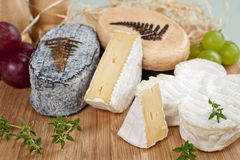 Luxurious cheese variation. Royalty Free Stock Images