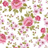 Luxurious color peony pattern. Royalty Free Stock Photography