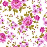 Luxurious color peony pattern. Royalty Free Stock Images