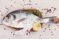 Luxurious fish background. Seafood. Stock Image