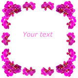 Luxurious frame of orchids. Images of the luxurious frame of orchids Royalty Free Stock Images