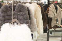 Luxurious fur coats for women in different colors hanging on sal. E in department store, beautiful fur coats for women stock image