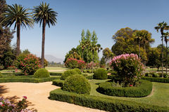 Luxurious Garden. A luxurious garden with a pair of palm trees, pink and red blooming bushes and grass paths stock image