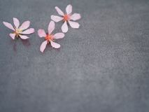 Pink flower on a gray background close-up stock photo