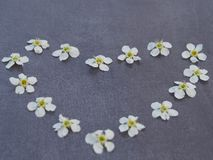 Heart of white flowers and petals on grey background close-up stock image
