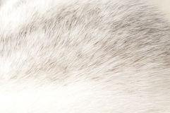 Luxurious mink fur texture Stock Photography