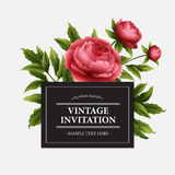 Luxurious  peony flower and leaves greeting card Royalty Free Stock Photos