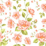 Luxurious peony pattern Royalty Free Stock Image