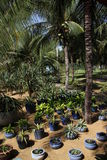 Luxurious tropical garden. Of a resort hotel in Vietnam Royalty Free Stock Images