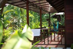 Luxurious tropical plants in a spa resort with hammock on the terrace in the jungle Royalty Free Stock Images