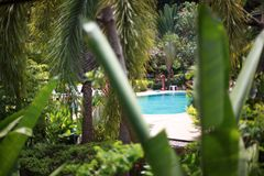 Luxurious tropical plants in a spa resort in the jungle and swimming pool. Royalty Free Stock Images