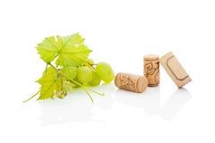 Luxurious wine background. Royalty Free Stock Photo
