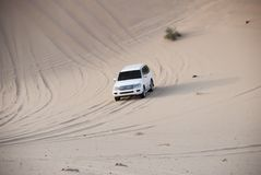 Luxurous white SUW all wheel drive 4x4 on desert safari on dunes exreme racing in arabia travel rally on sand in sports royalty free stock photos